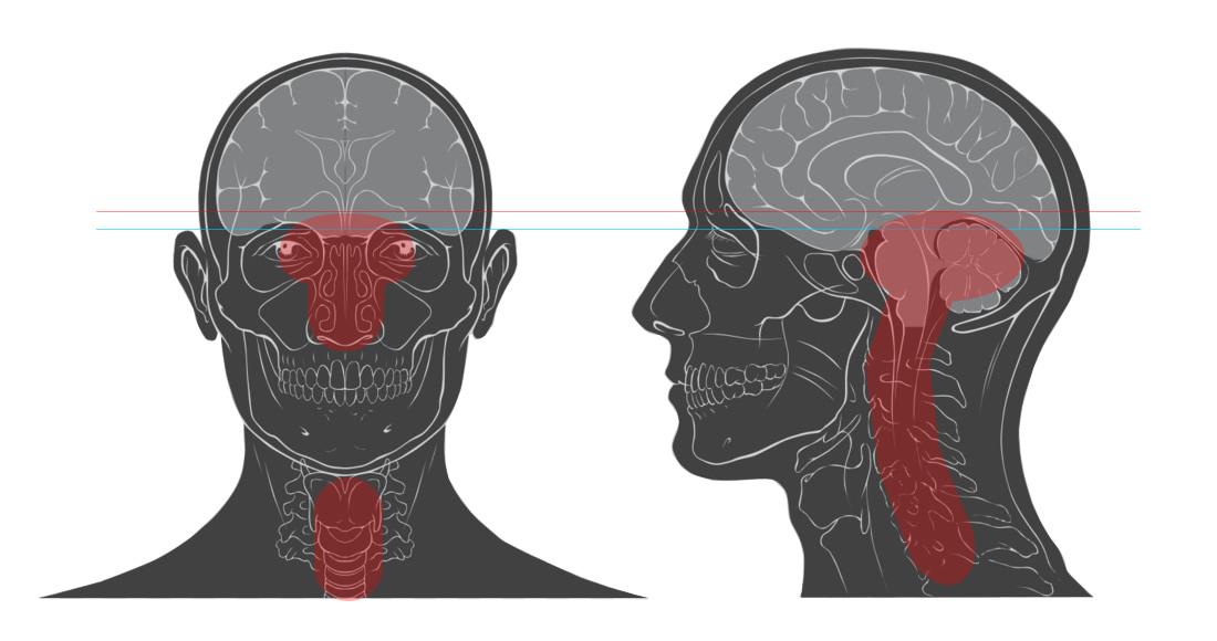 cranial target areas