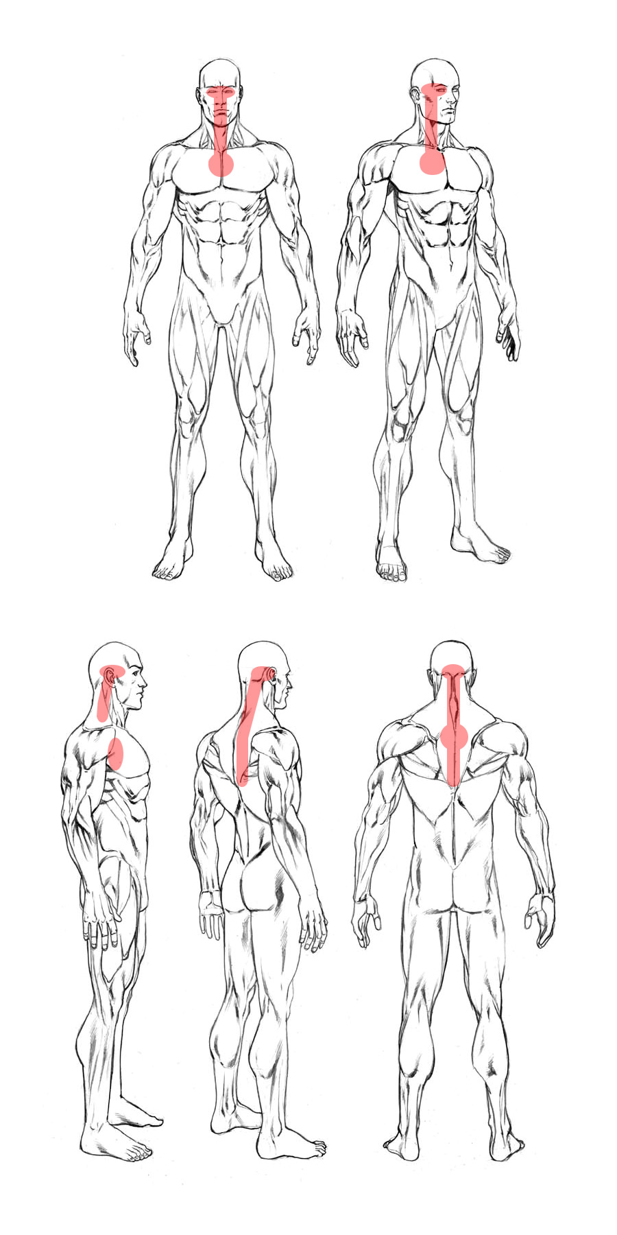 target areas on different body angles